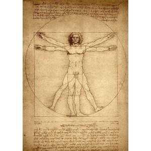Esquema de las proporciones del cuerpo humano